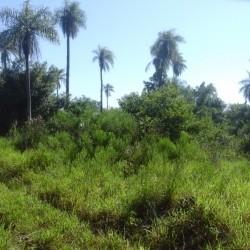 6,5 Hektar Grundstück in Piribebuy (Paraguay) zu verkaufen